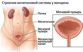 Что такое атония мочевого пузыря и как ее лечить
