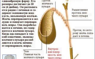 Травы, растворяющие камни в желчном пузыре, следует использовать разумно