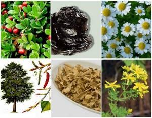 Фитотерапия против цистита о лечении мочегонными травами и полезные рецепты