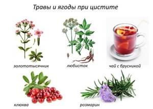 Перечень трав от цистита у женщин