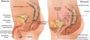 Полипы уретры у женщин лечение народными средствами