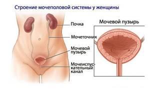 Проблемы с мочевым пузырем у женщин — причины и лечение