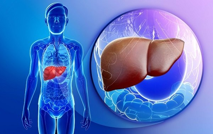 Печень и курение: влияние вредной привычки на состояние внешней железы