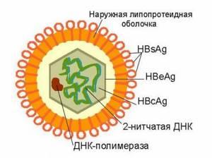 Поверхностный антиген вируса гепатита В – специфический маркер