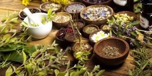 Травы для печени и желчного пузыря – метод общей терапии органов ГБС
