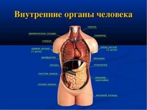 УЗИ печени, УЗИ почек – информативное обследование внутренних органов
