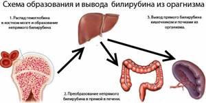 Гипербилирубинемия: что это такое, почему возникает и как лечить