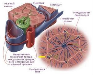 Асцит при циррозе печени: сколько живут, симптомы и лечение