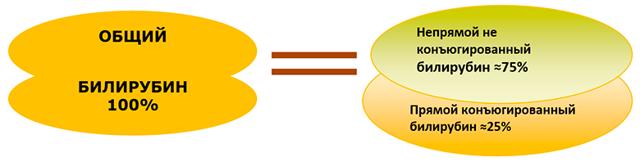 Обмен билирубина: нормальные показатели и отклонения