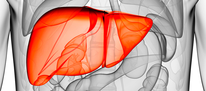 Последняя стадия цирроза печени: симптомы распада тканей