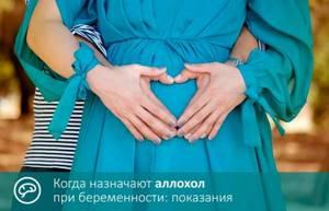 Аллохол при беременности – прием на разных сроках, строгое дозирование