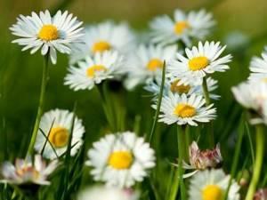 Травы при холецистите при правильном применении облегчают самочувствие