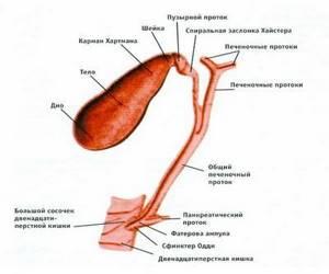 Препараты, разжижающие желчь в желчном пузыре, и их применение