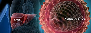 Показатели АЛТ и АСТ при гепатите растут из-за деструкции клеток органа
