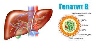 Маркеры гепатитов – признаки вируса, определяемые через анализ крови