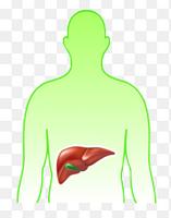 Урсосан после удаления желчного пузыря: дозировка и другие условия