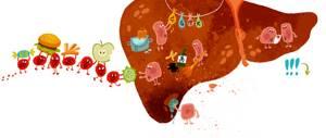 Проблемы с желчным пузырем – следствие невнимания к своему здоровью