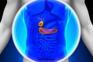 Желчный пузырь и поджелудочная железа связаны анатомически и функционально