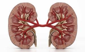 Печеночные отеки – результат дисфункции и падения онкотического давления