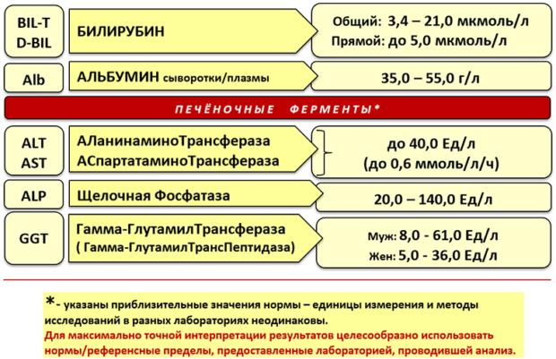 Показатели печеночных проб: что такое норма и как расшифровать