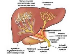 Желчные протоки: симптомы и причины патологий