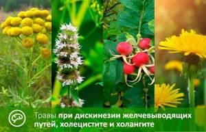 Желчегонный сбор: природная помощь организму
