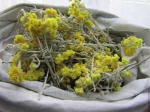 Трава бессмертник: полезные свойства, как использовать, противопоказания
