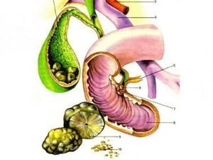 Полезно знать, что желчь – это один из важнейших ферментов в организме