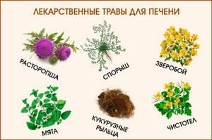 Травы для печени - как принимать, для чего нужны