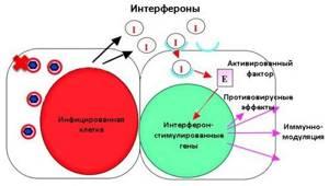 Фосфоглив Форте: показания и особенности применения препарата