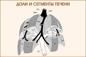 Классификация очаговых образований печени