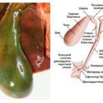 КВР печени – один из параметров, применяемых в диагностике болезней органа