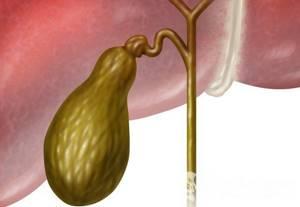 Функции желчного пузыря: за что отвечает в организме