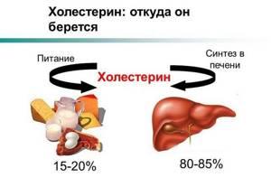 Холестерин и печень: взаимосвязь очевидна