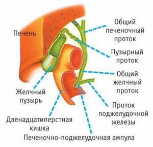 Густая желчь в желчном пузыре: лечение болезней с опасной симптоматикой