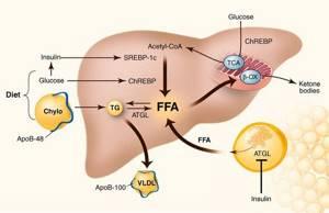 Неалкогольная жировая болезнь печени как опасная проблема трети населения