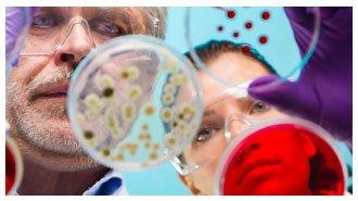 Препараты для восстановления печени: виды и особенности применения лекарственных средств